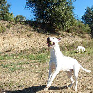 Doggo2